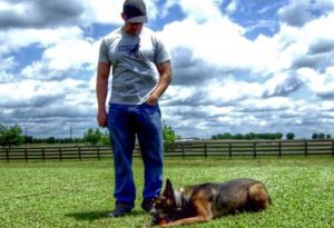 Team Dog Community - Online Dog Training Courses - Trikos