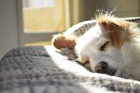 cute pet sleeping